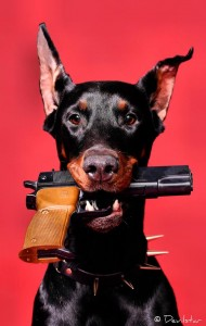 doberman with browning hi power