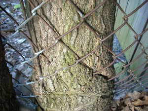 tree and fence 8