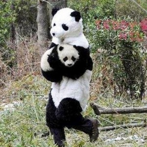 man in panda costume carries actual baby panda